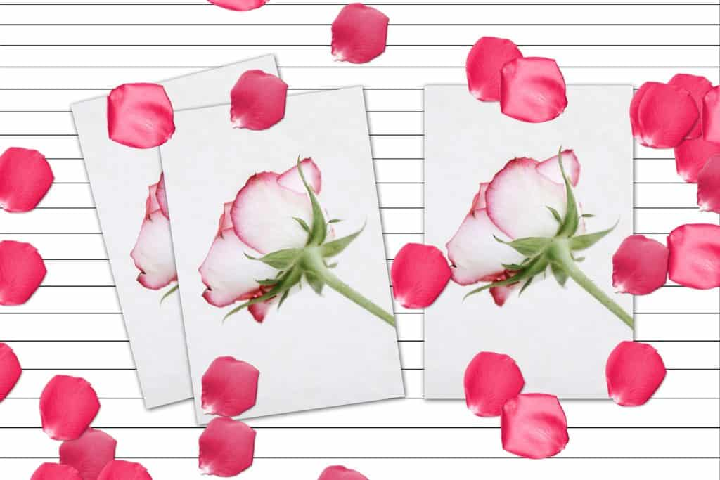 Make Stunning Greeting Cards Free With Adobe Spark